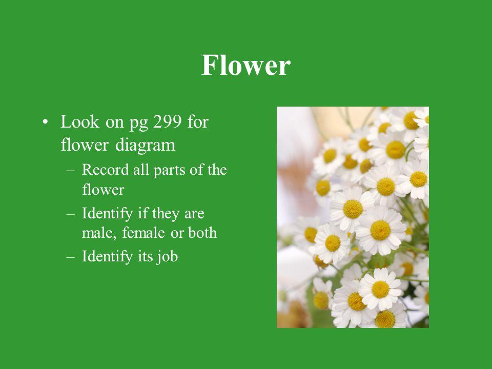 Flower Look on pg 299 for flower diagram