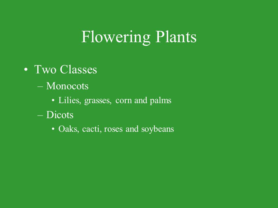 Flowering Plants Two Classes Monocots Dicots