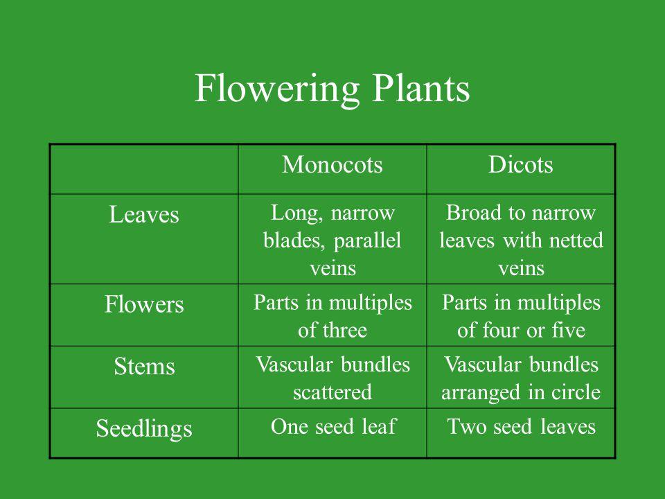 Flowering Plants Monocots Dicots Leaves Flowers Stems Seedlings