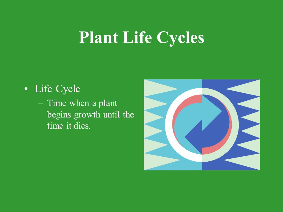 Plant Life Cycles Life Cycle