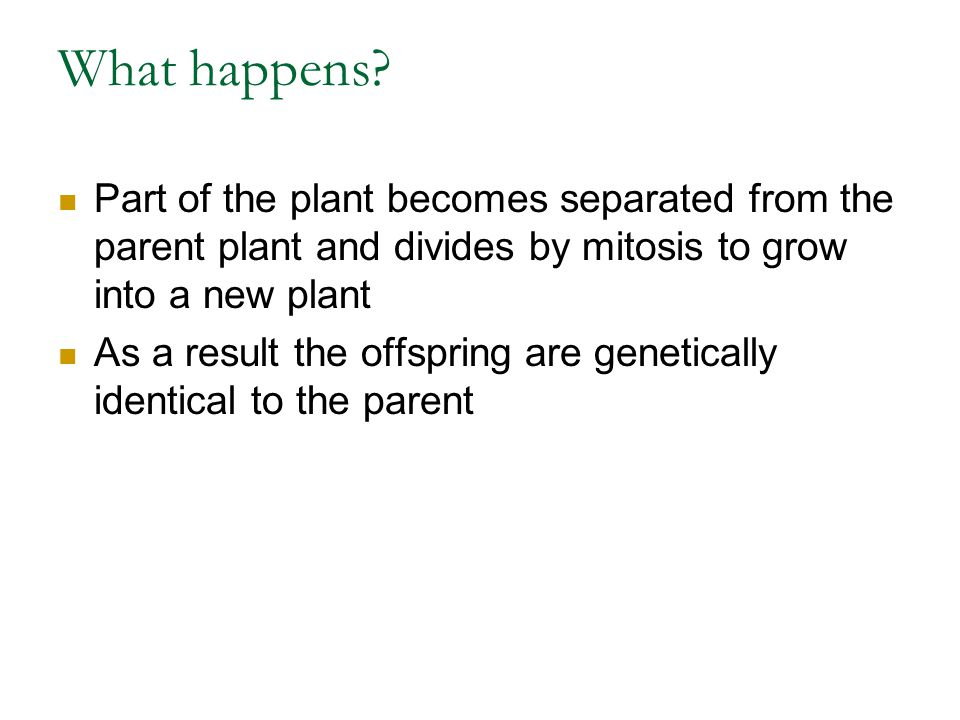 What happens Part of the plant becomes separated from the parent plant and divides by mitosis to grow into a new plant.