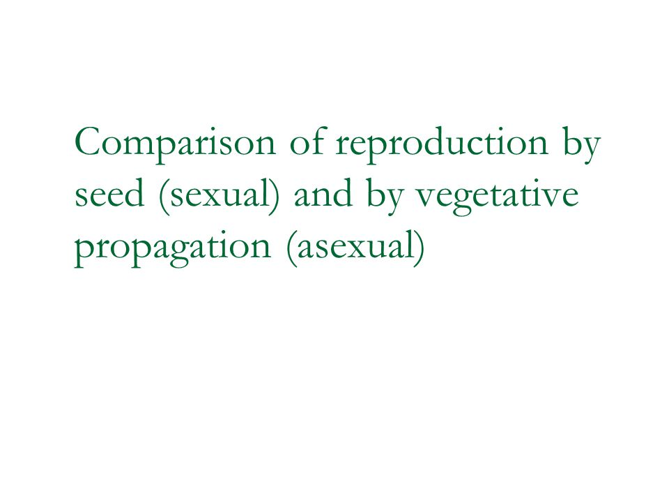 Comparison of reproduction by seed (sexual) and by vegetative propagation (asexual)