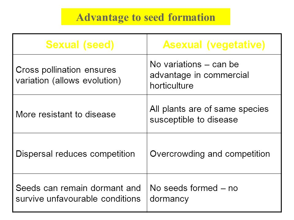 Advantage to seed formation