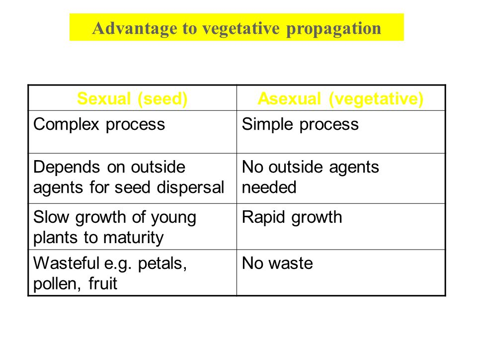Advantage to vegetative propagation