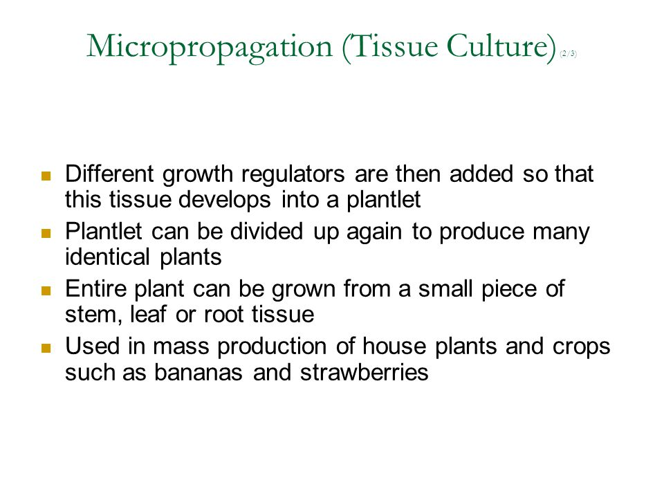 Micropropagation (Tissue Culture) (2/3)