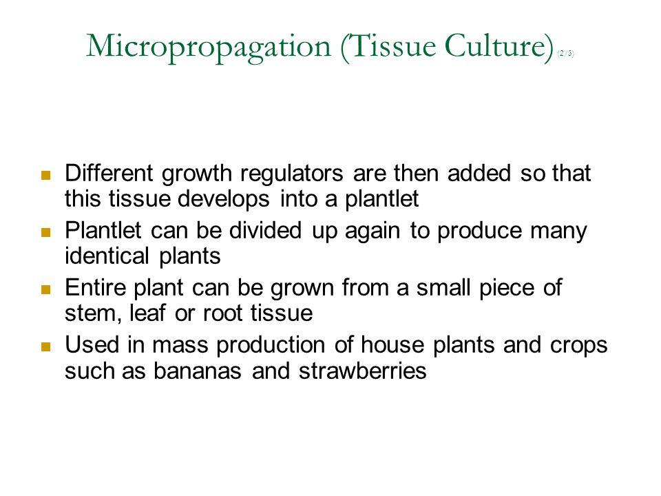 Micropropagation (Tissue Culture) (2/3)