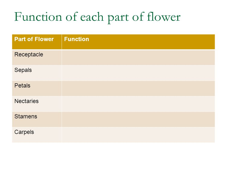 Function of each part of flower