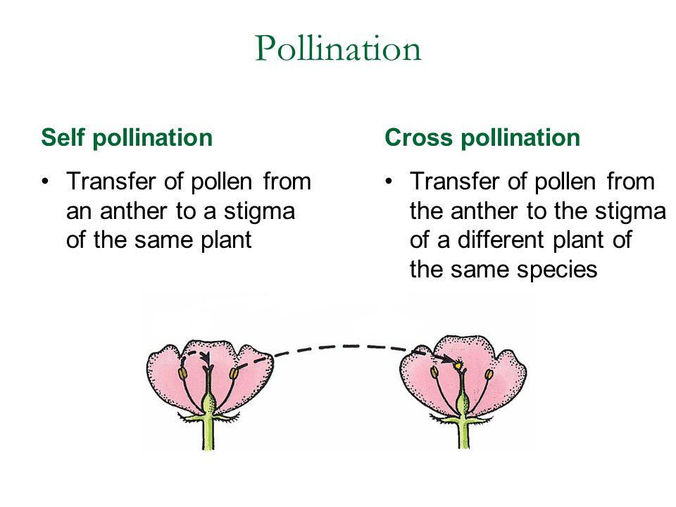 Pollination Self pollination