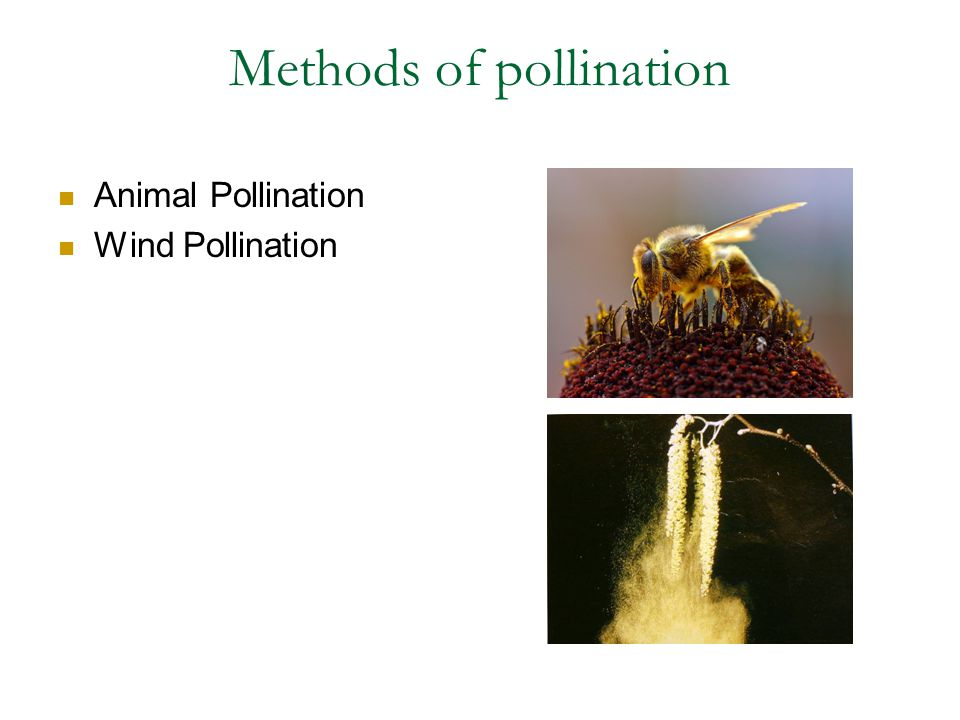 Methods of pollination