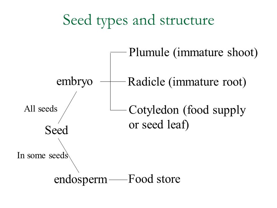 Seed types and structure