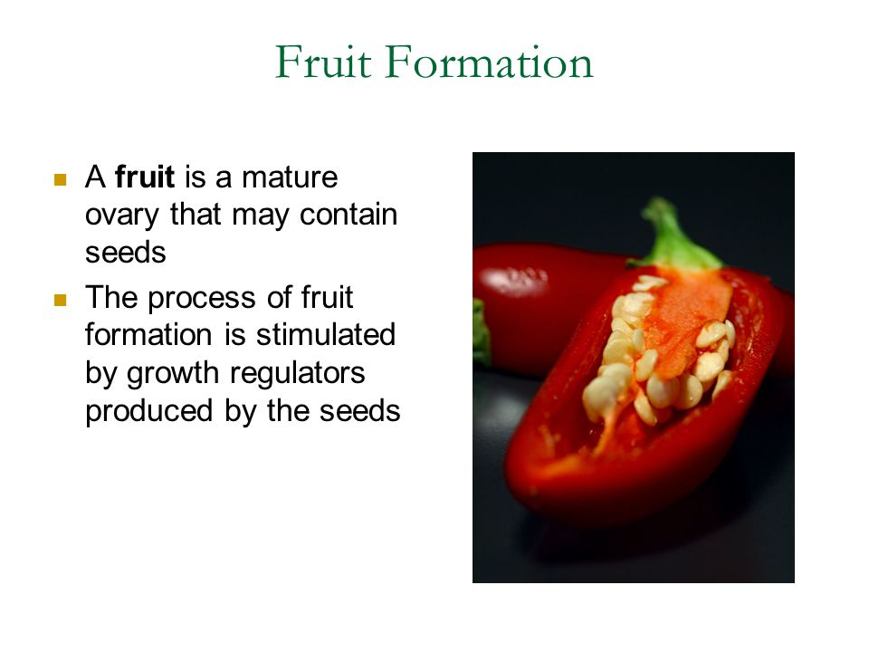 Fruit Formation A fruit is a mature ovary that may contain seeds