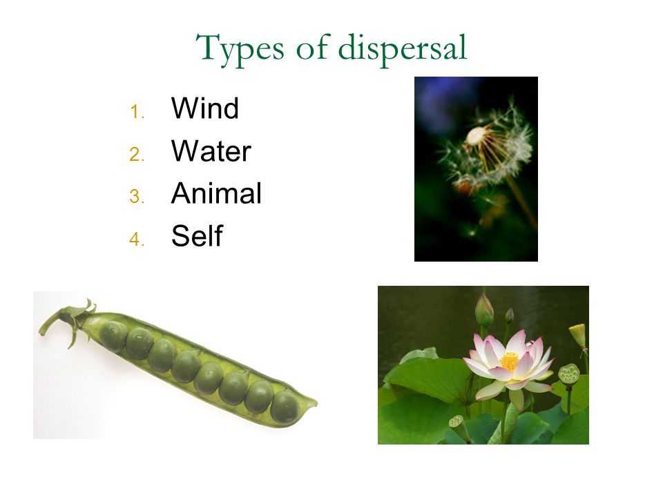 Types of dispersal Wind Water Animal Self