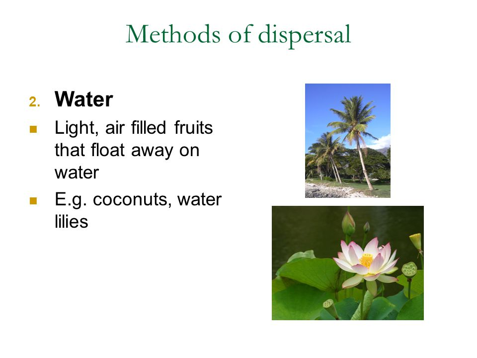 Methods of dispersal Water