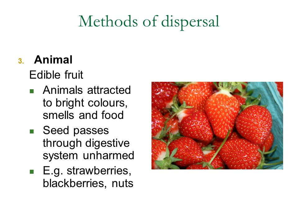 Methods of dispersal Animal Edible fruit