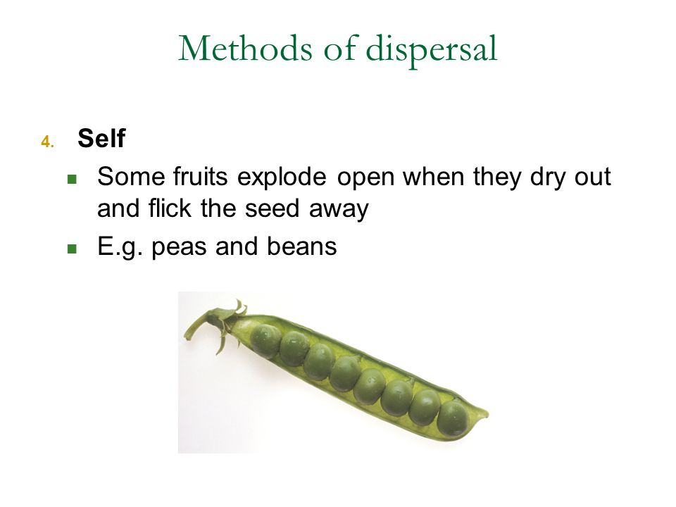 Methods of dispersal Self