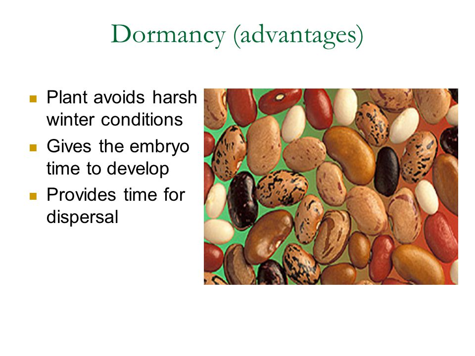 Dormancy (advantages)
