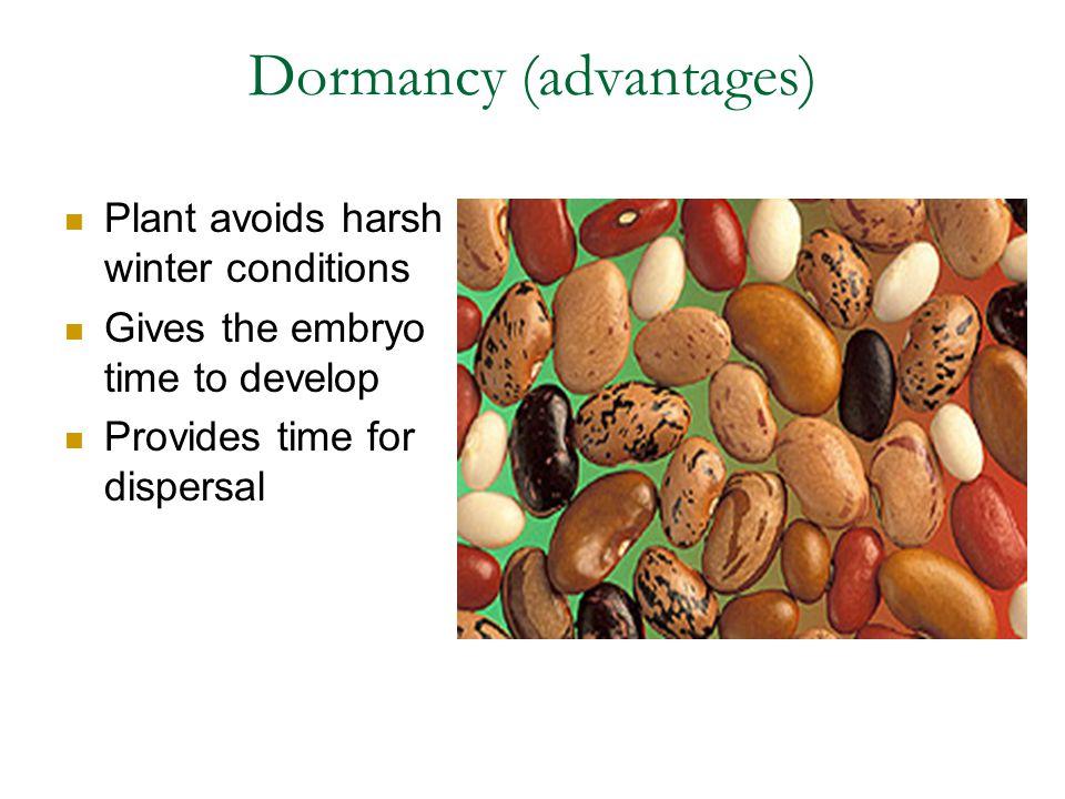 Dormancy (advantages)