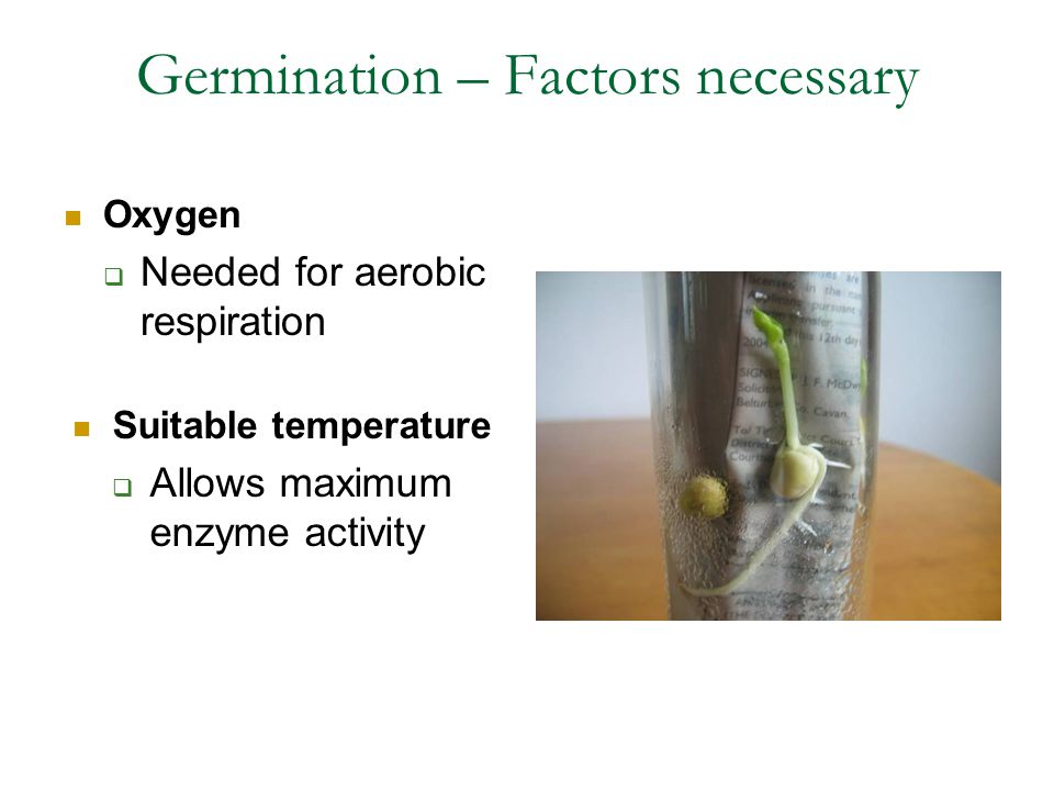 Germination – Factors necessary