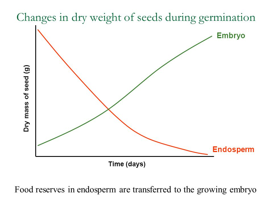 Changes in dry weight of seeds during germination