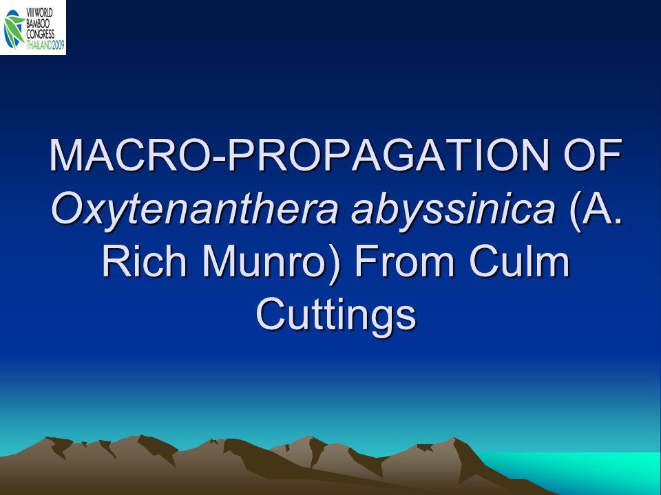 MACRO-PROPAGATION OF Oxytenanthera abyssinica (A