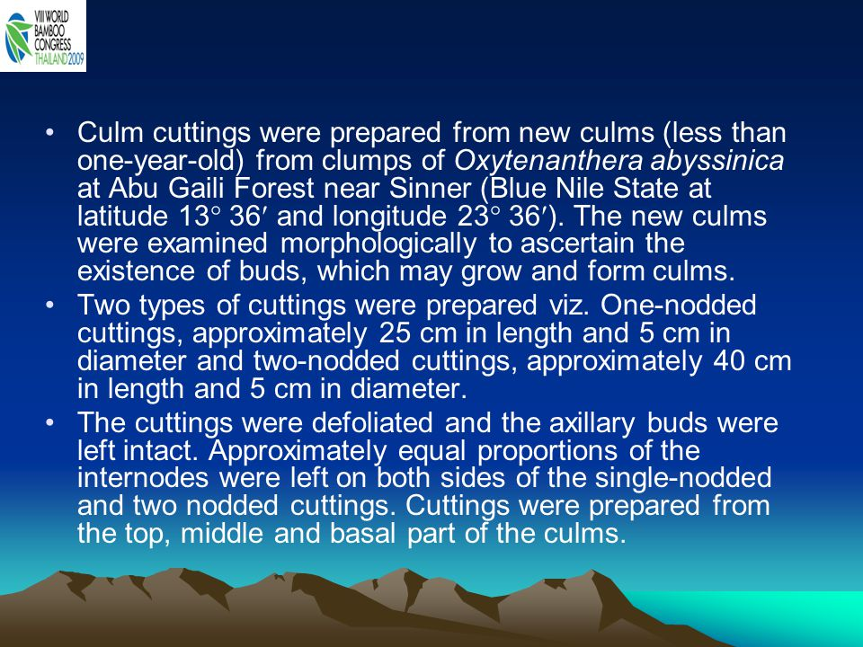 Culm cuttings were prepared from new culms (less than one-year-old) from clumps of Oxytenanthera abyssinica at Abu Gaili Forest near Sinner (Blue Nile State at latitude 13 36 and longitude 23 36). The new culms were examined morphologically to ascertain the existence of buds, which may grow and form culms.
