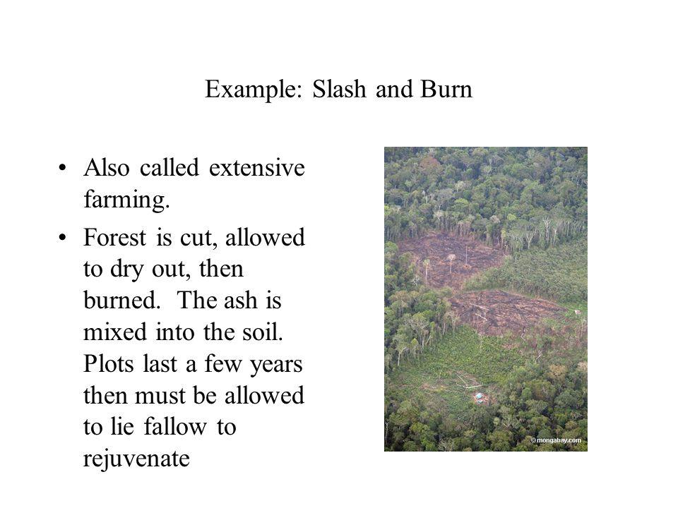 Example: Slash and Burn