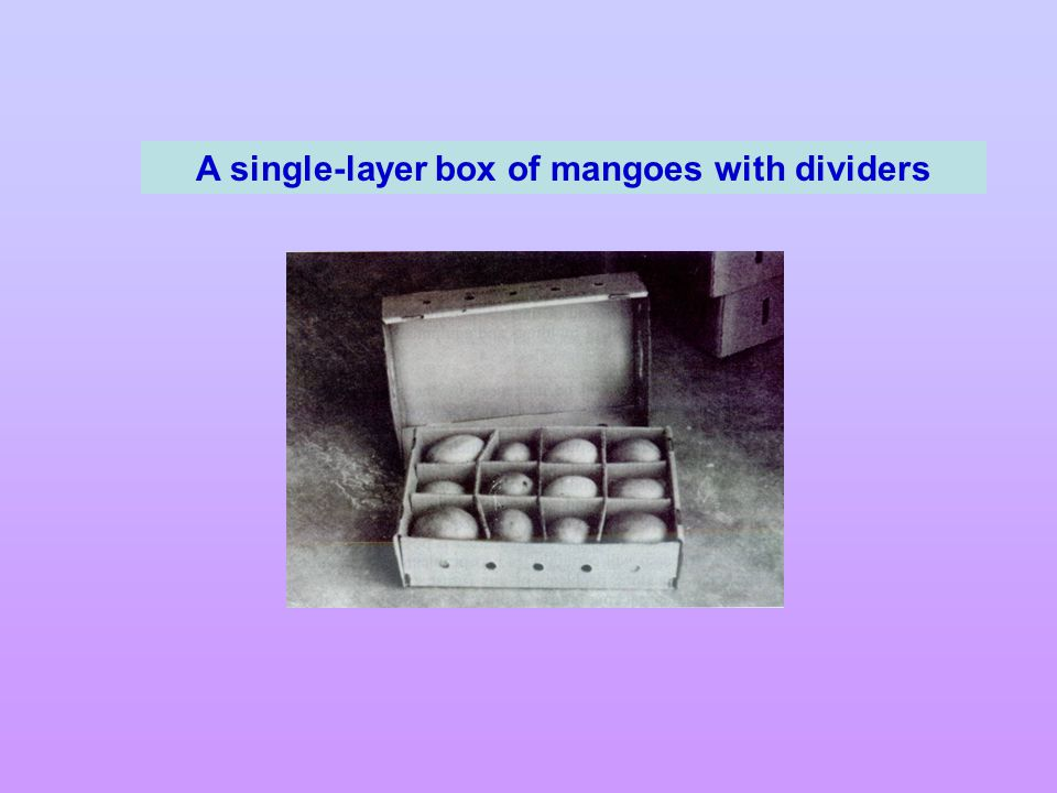 A single-layer box of mangoes with dividers