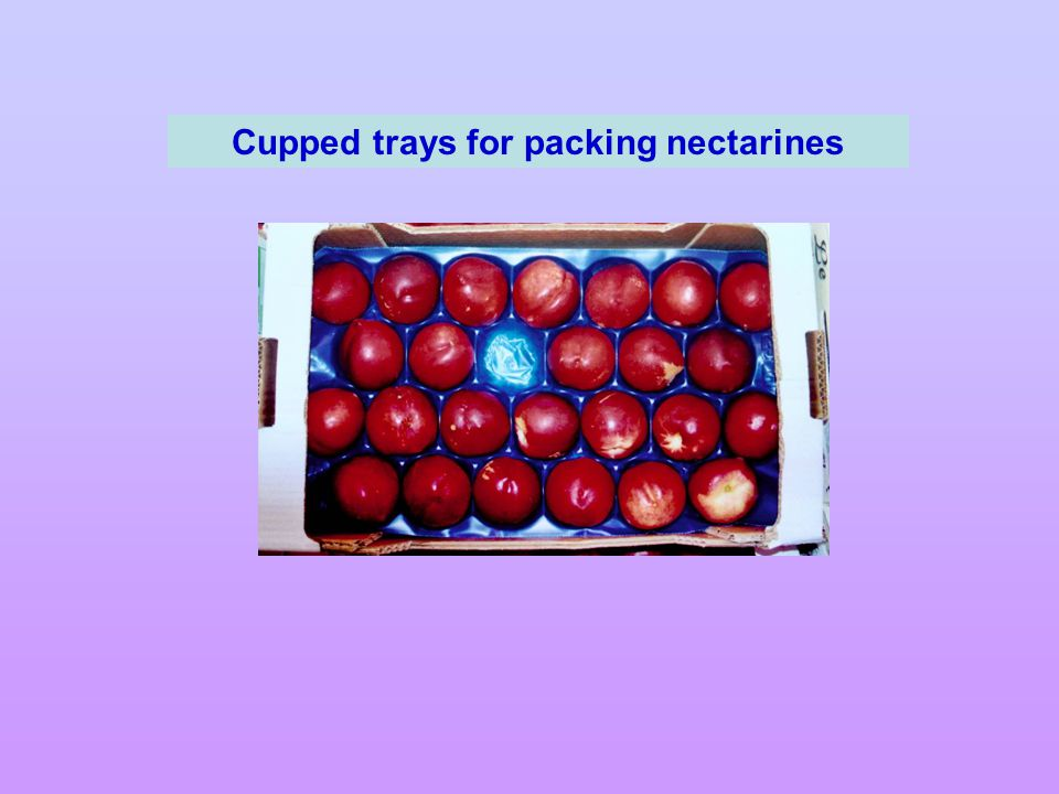 Cupped trays for packing nectarines