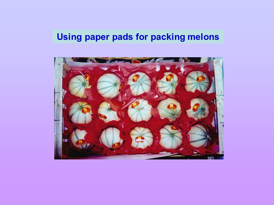 Using paper pads for packing melons