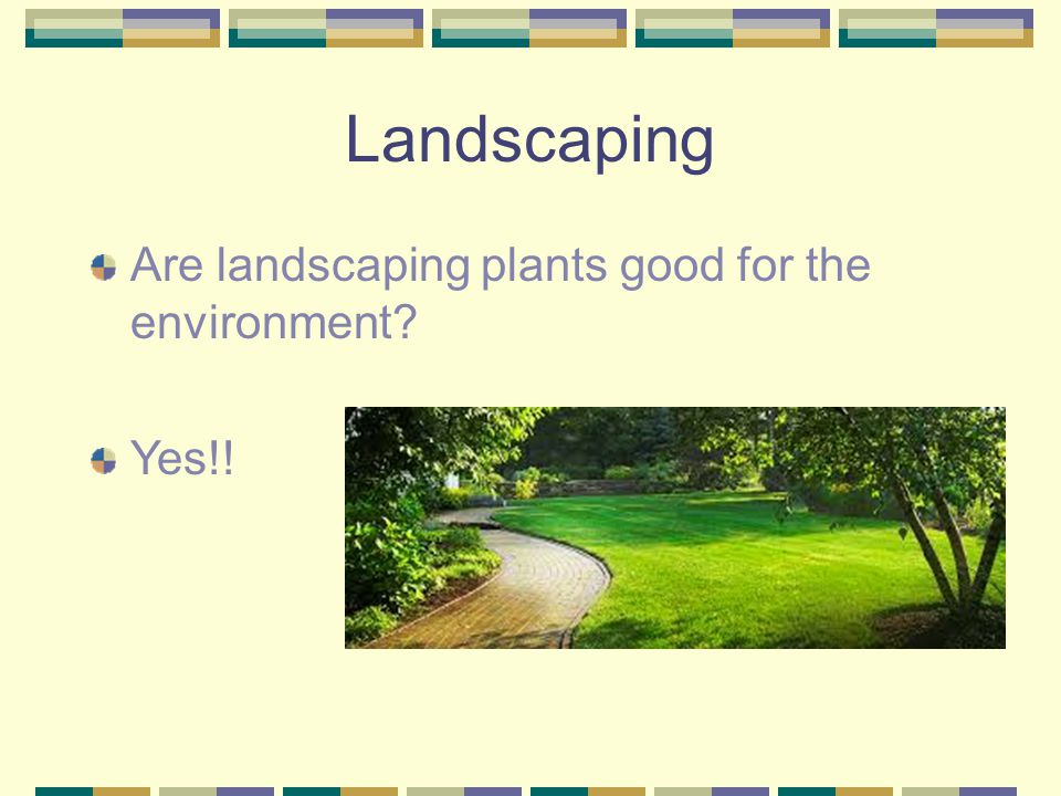 Landscaping Are landscaping plants good for the environment Yes!!