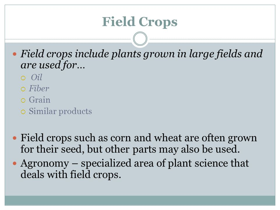 Field Crops Field crops include plants grown in large fields and are used for… Oil. Fiber. Grain.