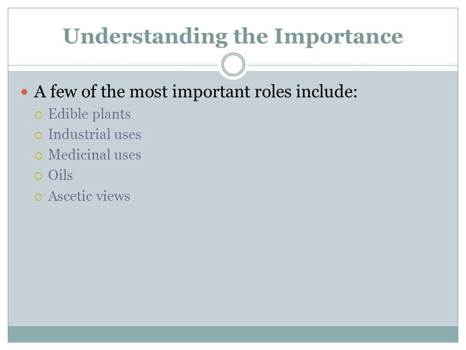 Understanding the Importance