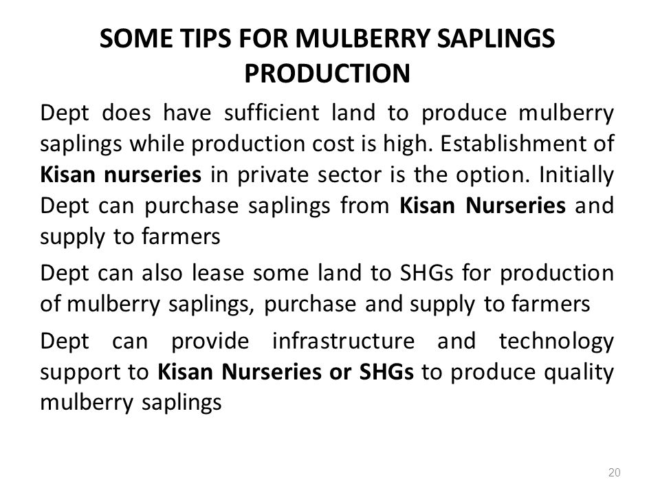 SOME TIPS FOR MULBERRY SAPLINGS PRODUCTION
