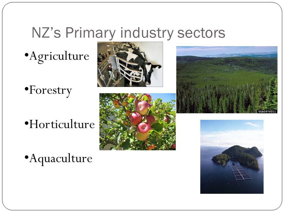 NZ's Primary industry sectors