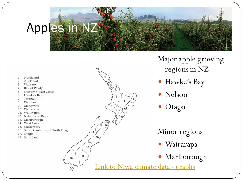 Apples in NZ Major apple growing regions in NZ Hawke's Bay Nelson