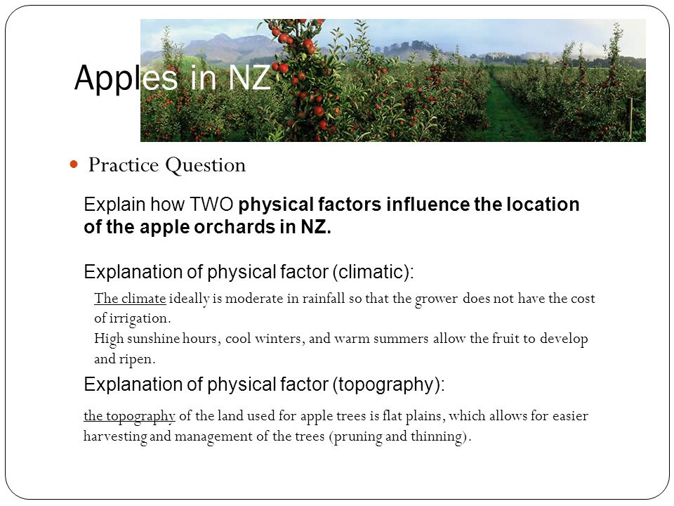 Apples in NZ Practice Question