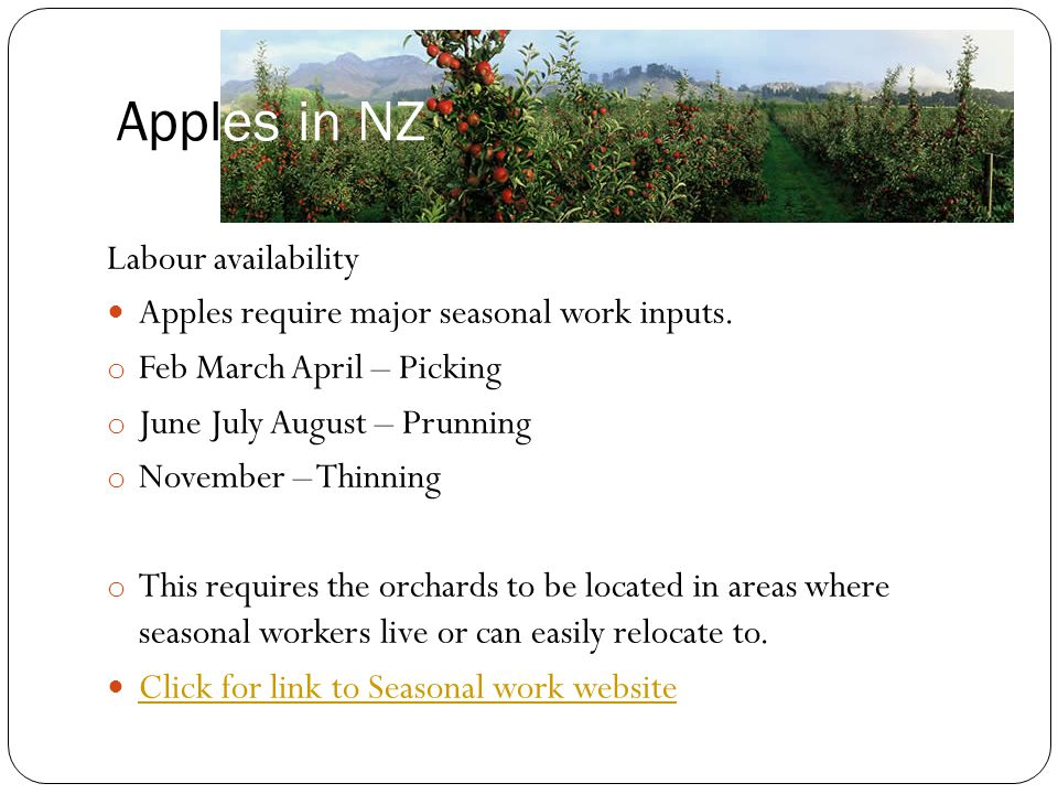 Apples in NZ Labour availability
