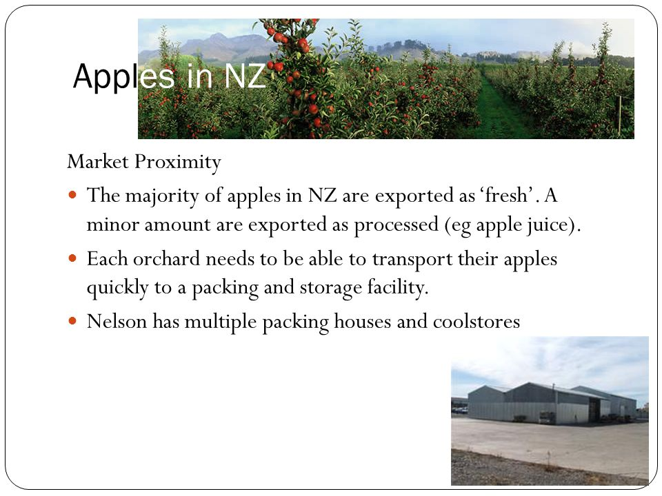 Apples in NZ Market Proximity