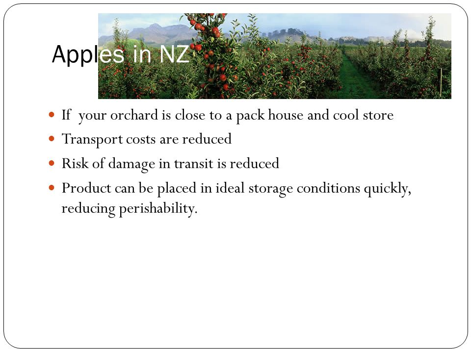 Apples in NZ If your orchard is close to a pack house and cool store
