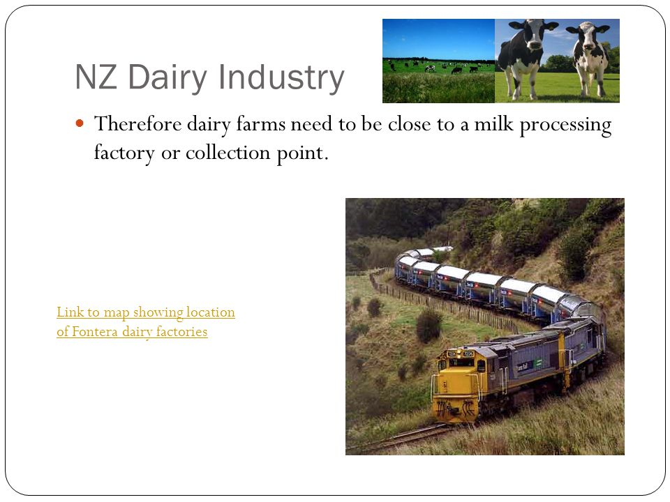 NZ Dairy Industry Therefore dairy farms need to be close to a milk processing factory or collection point.