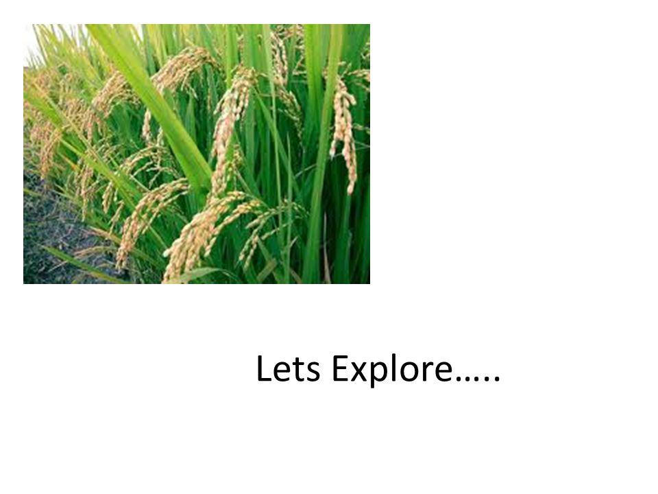 Lets Explore…..