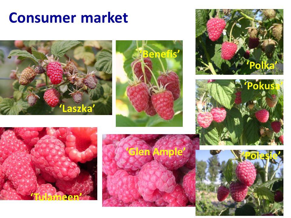 Consumer market 'Benefis' 'Polka' 'Pokusa' 'Laszka' 'Glen Ample'