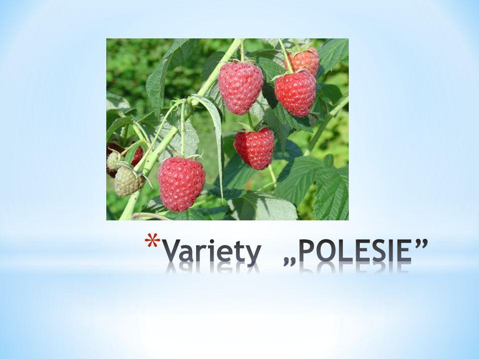 """Variety """"POLESIE"""