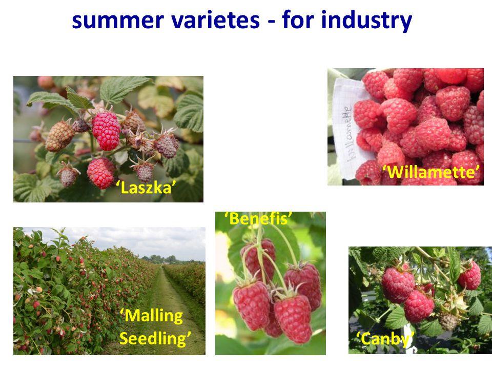 summer varietes - for industry