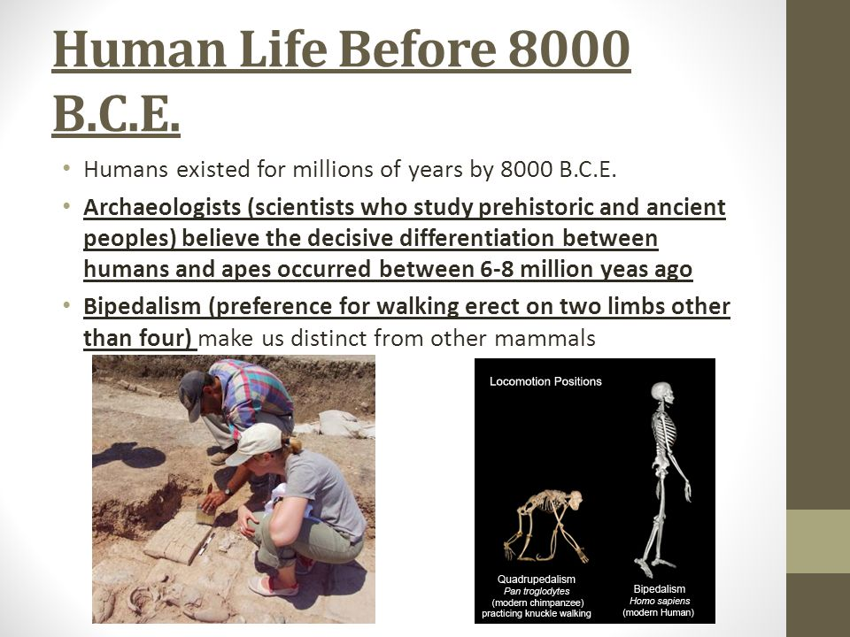 Human Life Before 8000 B.C.E. Humans existed for millions of years by 8000 B.C.E.