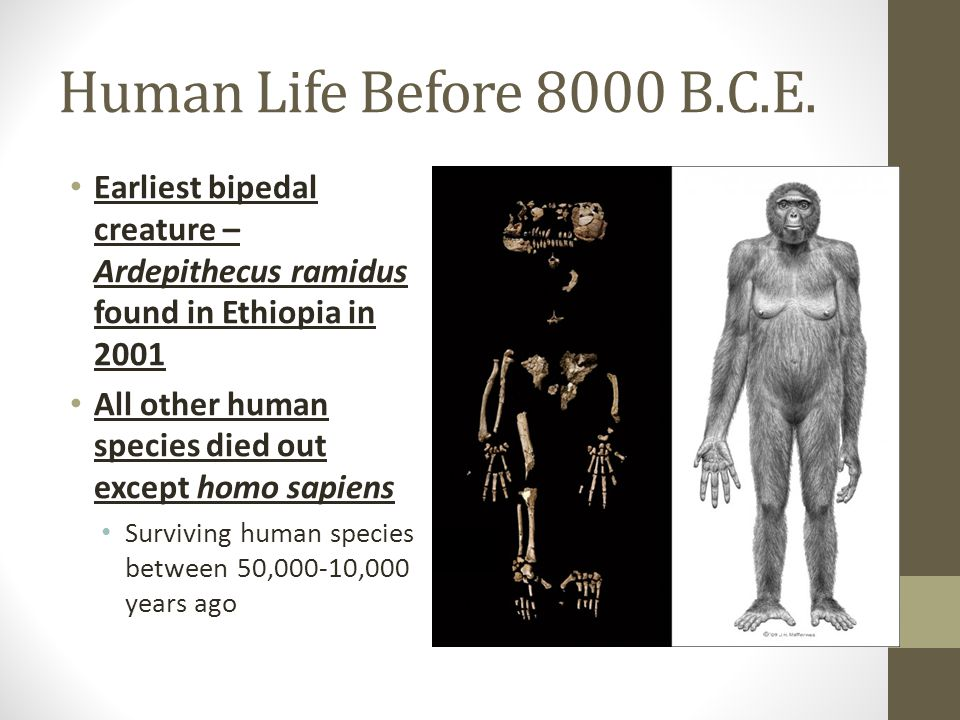 Human Life Before 8000 B.C.E. Earliest bipedal creature – Ardepithecus ramidus found in Ethiopia in 2001.