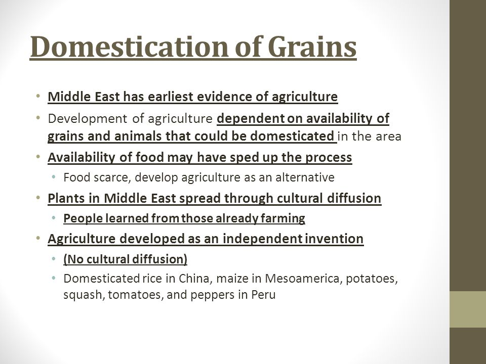 Domestication of Grains