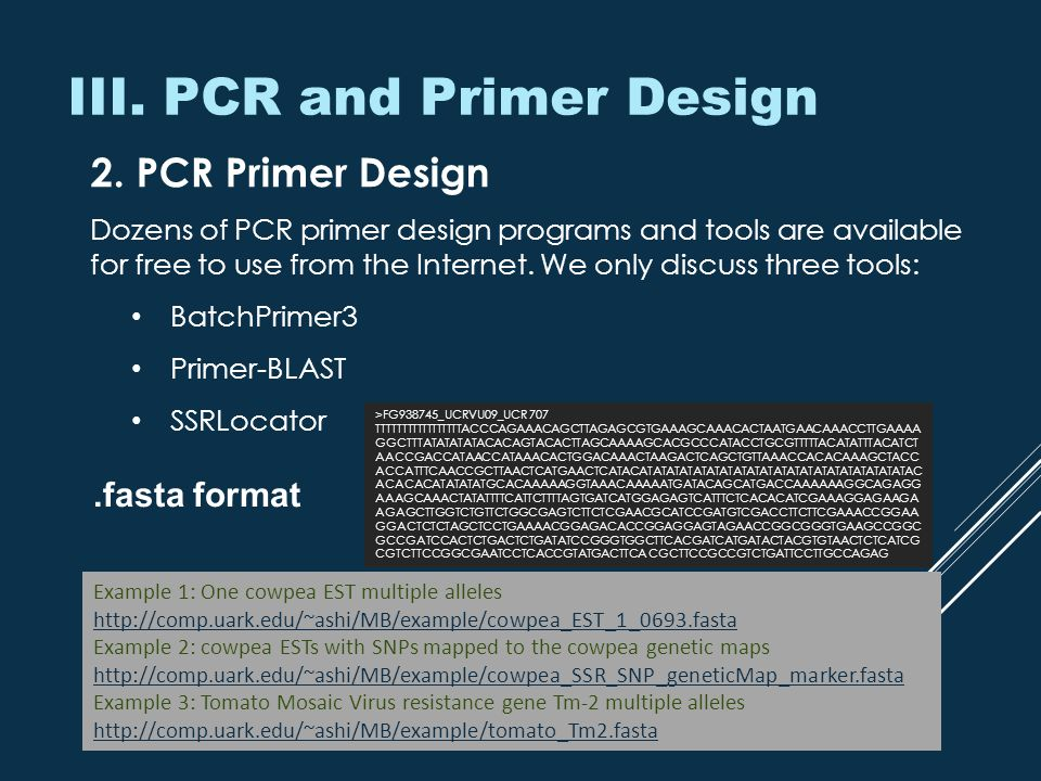 III. PCR and Primer Design