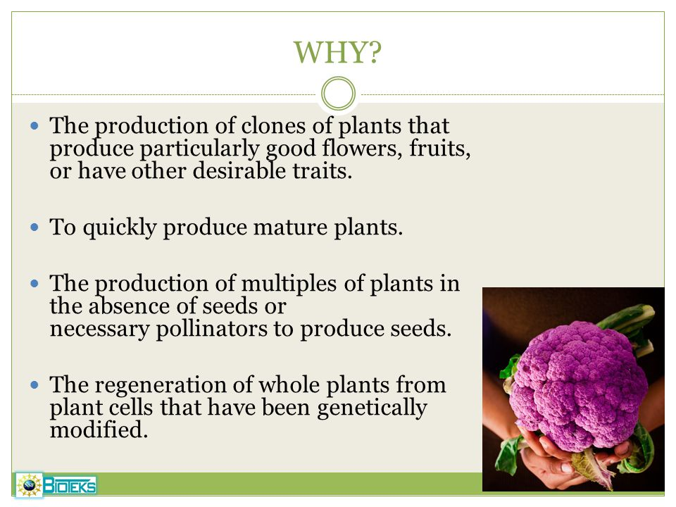 WHY The production of clones of plants that produce particularly good flowers, fruits, or have other desirable traits.