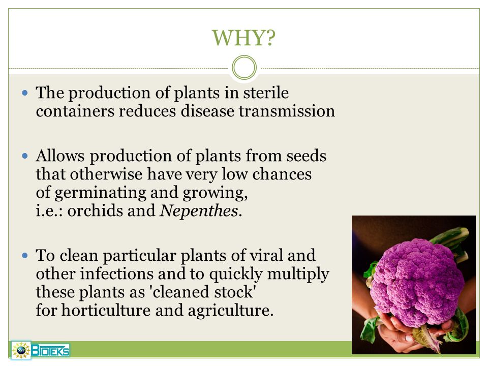 WHY The production of plants in sterile containers reduces disease transmission.